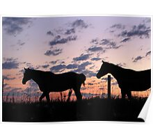 Silhouetted Horses  Poster