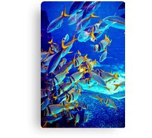 School of Fish  Canvas Print
