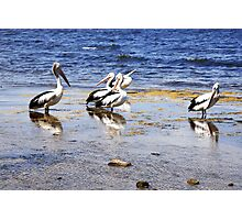 Instant attraction Photographic Print