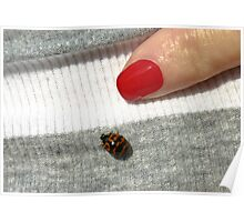 """"""" The lady and The Lady Bug """". Poster"""