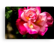 Vibrant Rose Canvas Print