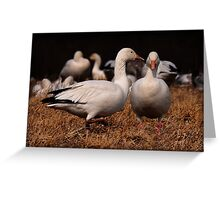 Gossiping Geese Greeting Card