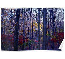 Autumn Color 3a Poster