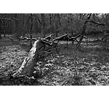 Sedge Meadow Photographic Print