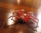 Creepy Spider (Arachnid) by Matthew Walmsley-Sims