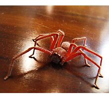 Creepy Spider (Arachnid) Photographic Print