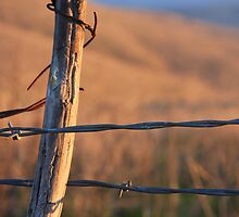 barbed wire by Shannon Gifford