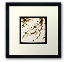 Spring In Sepia Framed Print