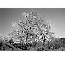 Trees in Snow - Borga Nari - Italia Photographic Print