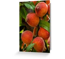Bountiful peaches Greeting Card