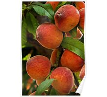 Bountiful peaches Poster