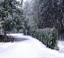 Spring Snow in the Driveway by Jann Ashworth