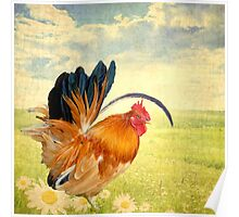 Mr. Rooster Greets the Day Poster