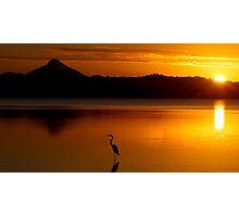 Heron Heaven - Lake Weyba Queensland Australia Photographic Print