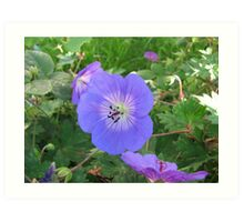 Blue Beauty - Summer Flower Art Print