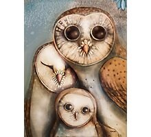 three wise owls Photographic Print