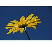 vibrancy Photographic Print