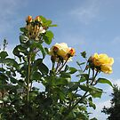 Yellow Roses and Blue Sky by BlueMoonRose