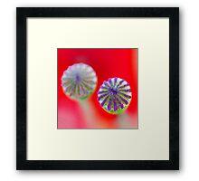 Study of Poppy Seed Pod #6 Framed Print