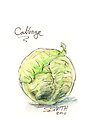 Cabbage by Stephanie Smith