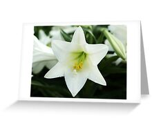 Easter Lilly Greeting Card