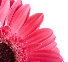 Pretty  in pink by Ella Hall