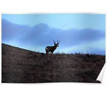 Stag on the Hill Poster