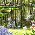 Tulip Reflections - Keukenhof Gardens, Holland by BlueMoonRose