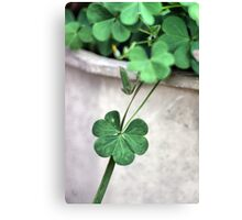 A Drop of Luck Canvas Print