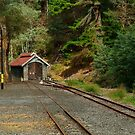 Railway Coach Shed,Walhalla  by Joe Mortelliti