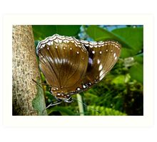 Common  Female Eggfly Butterfly Art Print