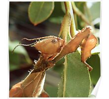 Alien! Female Stick Insect  Poster
