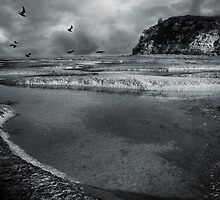 birds of the tide by Anthony Mancuso