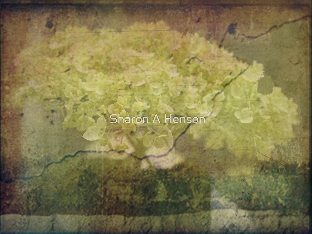 Vintage Hydrangea by Sharon A. Henson