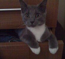 Kitten in the Draw by neil90