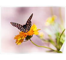 A Sip Of Coreopsis Poster