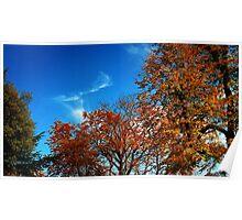 Autumn colours - Regent's Park, London Poster