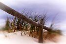 Log Fence by Pene Stevens