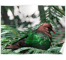 Emerald Dove Poster
