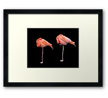 Flamingos   Black Framed Print