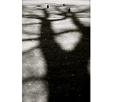 Three crows in a tree Photographic Print