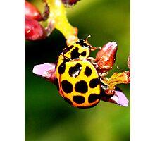 Pretty Ladybug Photographic Print