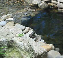 My Pond by JRSousa