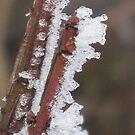 ice twig by Jeannie Matthews