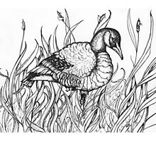 Pen and Ink Canadian Goose - Heather Lynn White Photographic Print