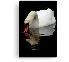 Mute Swan V Canvas Print