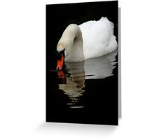 Mute Swan V Greeting Card
