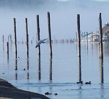 Morning Fog by dwcdaid