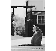 Nugget the Cat Photographic Print