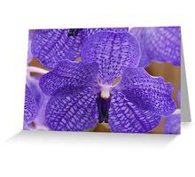 Vanda Purple Orchid Greeting Card
